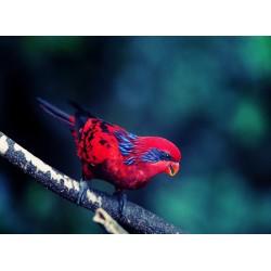 infrapanel - Červený ptáček